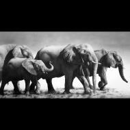 David Bjurstrom: Elephant Walk