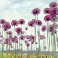 Raquel Edwards: Field of Alliums