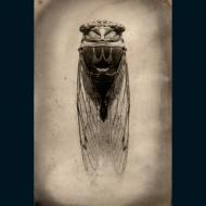 Micheal Paul Cole: Cicada