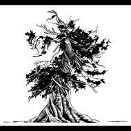 Kelli MacConnell: Whitebark Pine