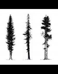 Kelli MacConnell: Cedar, Fir, Redwood